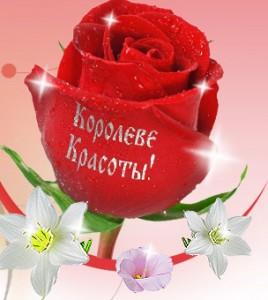 Полезные и целебные свойства роз и запахов