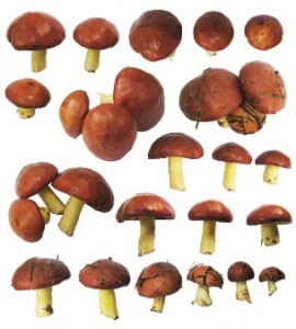 Где используются магические грибы?