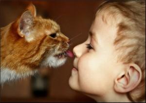 Как лечится кошками? Способна ли кошка лечить?