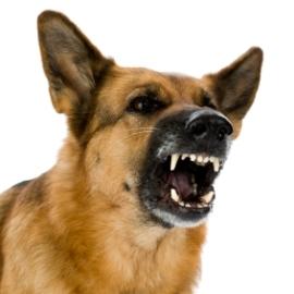 Как не быть покусанным собакой