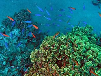 Как применяют морскую капусту?